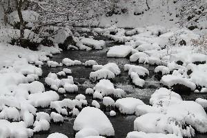 赤川も雪化粧です