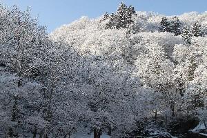 赤川渓谷雪化粧
