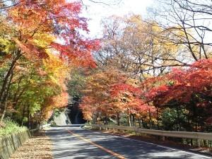 回顧園地周辺の紅葉